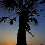 Sable Palm Sunrise