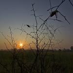 Grasshopper Sunrise