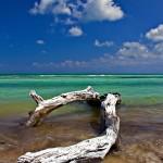 Driftwood Bahia Honda