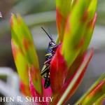 Grasshopper and Bromeliad