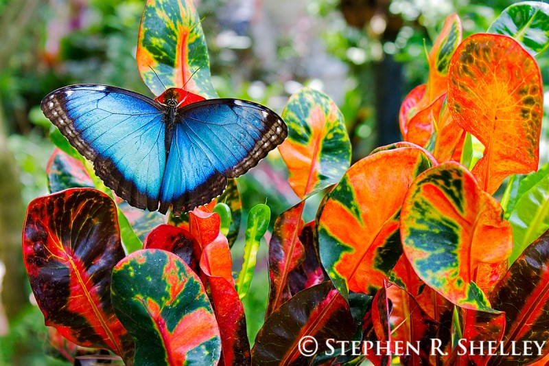 The Key West Butterfly & Nature Conservatory boasts about 50 to 60 species of butterflies. paleololigo / Flickr Mallory Square is a popular gathering place to watch the sunsets in Key West.
