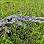 Everglades Prairie