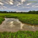 Everglades Wort Grass Prairie