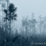 Everglades National Park Foggy Pinelands Landscape