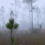 Everglades National Park Fog