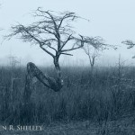Everglades National Park Z Tree Foggy Morning