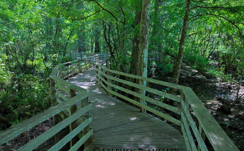Corkscrew Swamp Sancutary