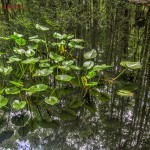 Highland Hammock Reflections