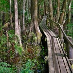 Highland Hammock Boardwalk