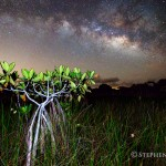 Mangrove Milky Way