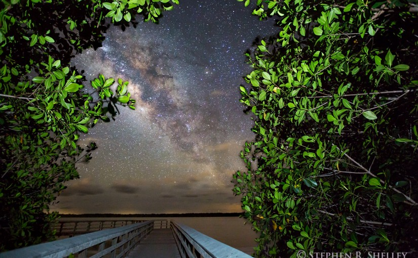 Milky Way Landscapes Everglades National Park