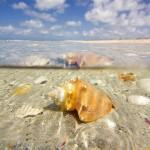 Underwater Conch Landscape
